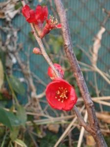 petite-fleur-dhiver1